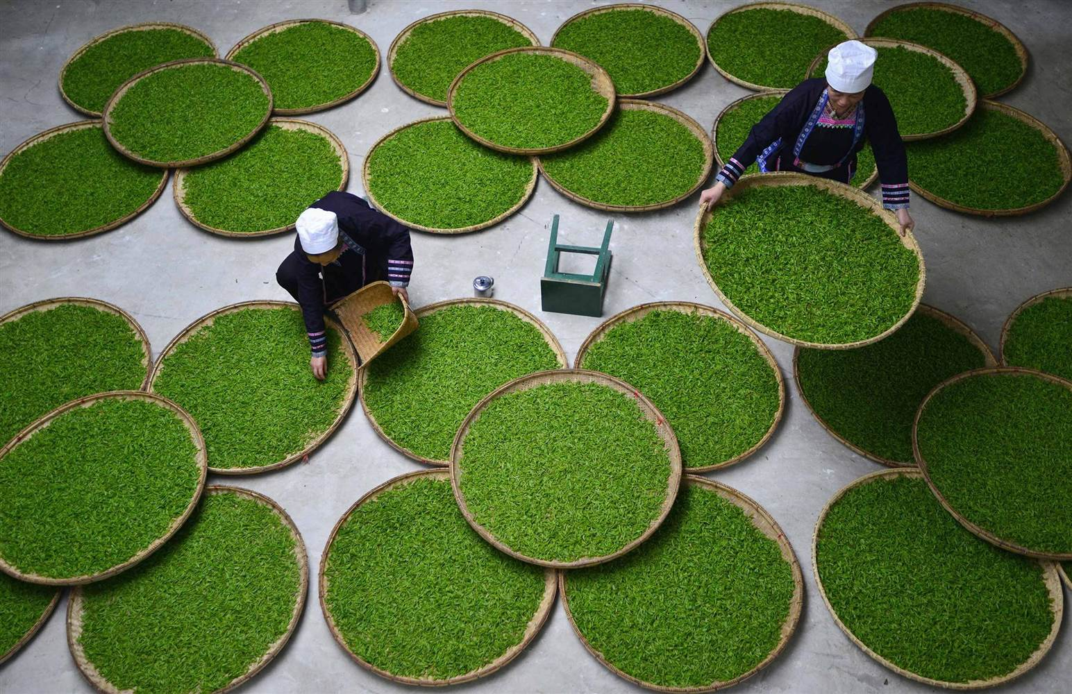 Women Work at a Tea Leaf